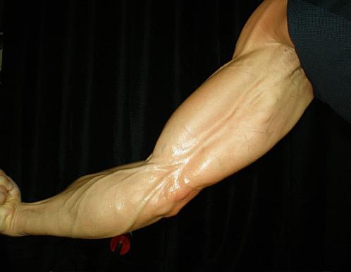 Programme d'entrainement bras