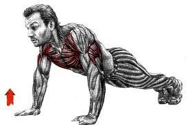 muscler les pectoraux et les bras