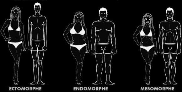 bruleur graisse et morphotype
